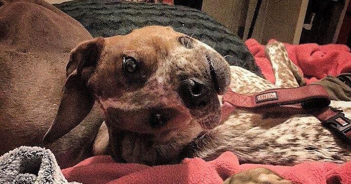 Пользователь интернета поделился фотографией своей собаки, и теперь все пытаются понять, что с ней не так