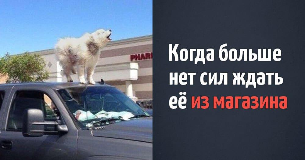 15 забавных фотографий псов, чьи повседневные проблемы совершенно не отличаются от человеческих