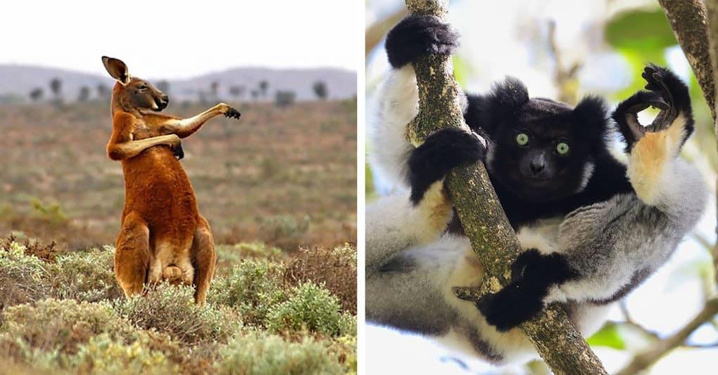 25 фотографий-финалистов конкурса на лучшую комедийную фотографию животных 2017 года