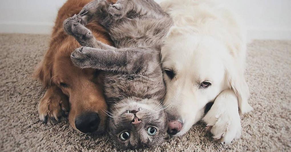 Они были двумя счастливыми влюблёнными собаками. Но потом пришёл он