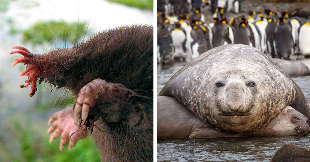 18 представителей животного мира, которых лучше вообще никогда не видеть
