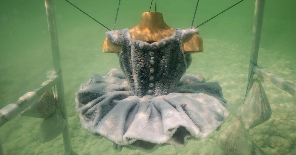 Художница погружает предметы в Мёртвое море, и вот какими они там становятся