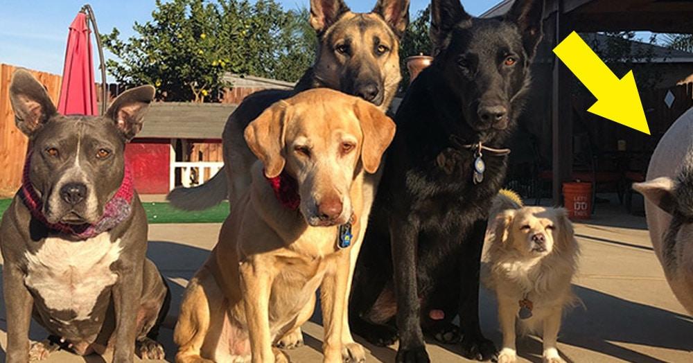 У этих собак есть самый необычный товарищ, которого только можно представить, и он поразит вас своей харизмой