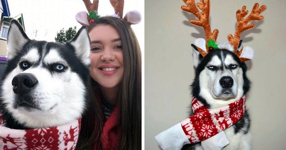Хозяйка устроила рождественскую фотосессию со своим псом, но получившиеся снимки вряд ли можно назвать праздничными