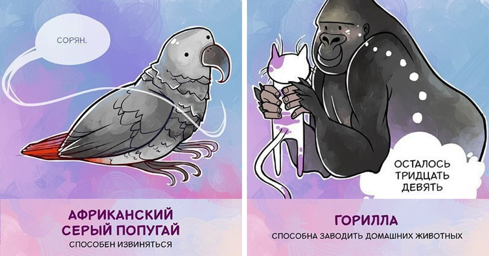 14 правдивых фактов о животных в остроумных иллюстрациях питерской художницы, которые способны удивить кого угодно