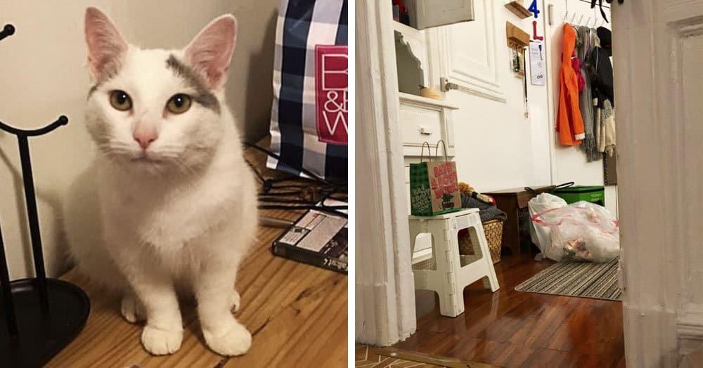 Девушка опубликовала фотографии своего кота Вареничка, но самого котика на них найти не так-то и просто. Но вы попытайтесь