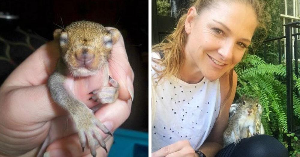 Девушка помогла выжить раненому бельчонку, и вот как теперь зверёк благодарит спасшую её семью