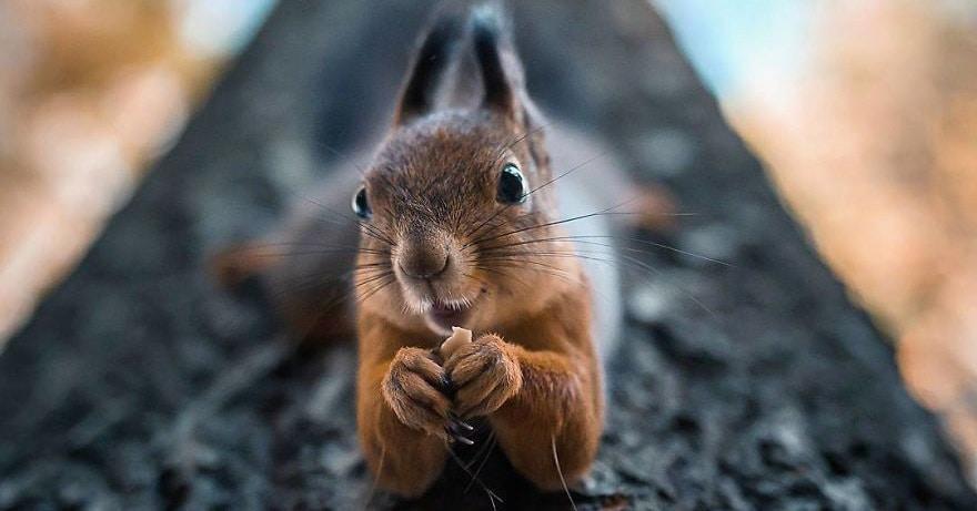 Этот фотограф делает снимки лесных животных, как будто они профессиональные модели, и мы не можем перестать любоваться ими
