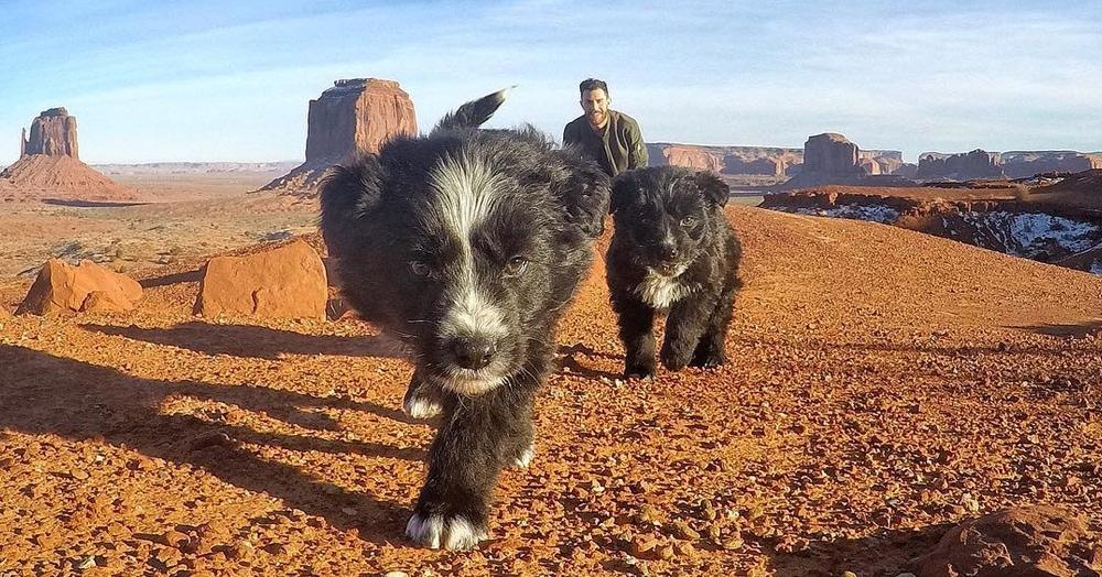 Этот мужчина нашёл двоих щенков прямо посреди пустыни. Вылечил и отправился с ними на прогулку, которую они вряд ли забудут