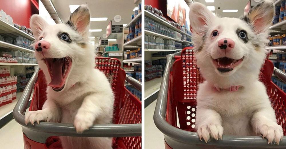 Эта собачка выглядит невероятно счастливой и жизнерадостной, и причина такой реакции умиляет своей простотой
