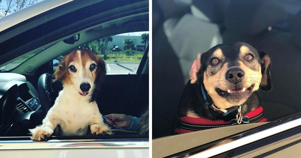 Работница автокафе делает фото собак в ожидании вкусняшки и выкладывает их у себя на странице. Эти эмоции непередаваемы