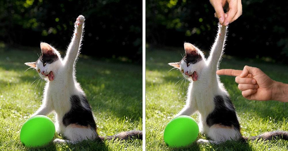 Яростная битва котика и воздушного шарика так понравилась интернет-пользователям, что превратилась в битву фотошоперов