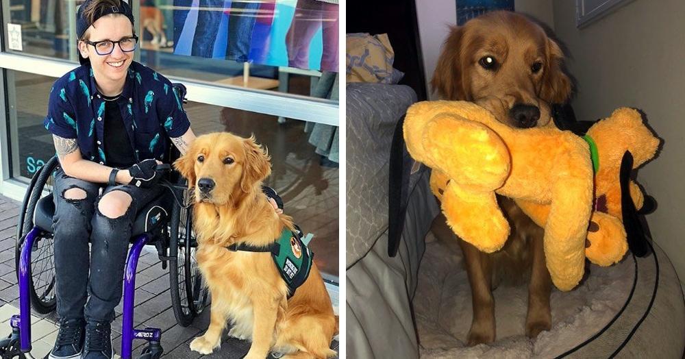 У этого пса была любимая игрушка и не менее любимый хозяин, который однажды решил удивить своего питомца, и этот сюрприз определенно удался