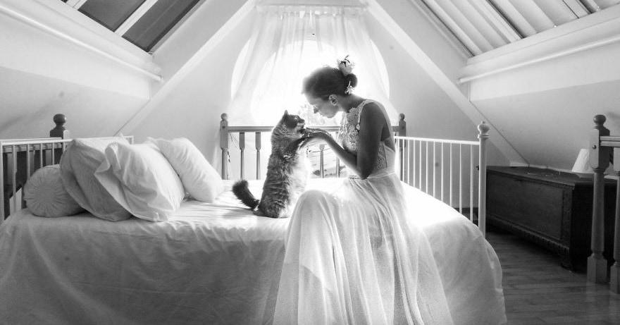 Девушка делает прекрасные пост-свадебные фотографии молодожёнов с котами, и эта идея может вскоре покорить весь мир