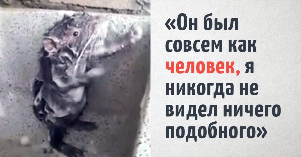 Мужчина захотел принять душ, но его опередил крысёнок, который так по-человечески намывался, что ему не хватало только мочалки