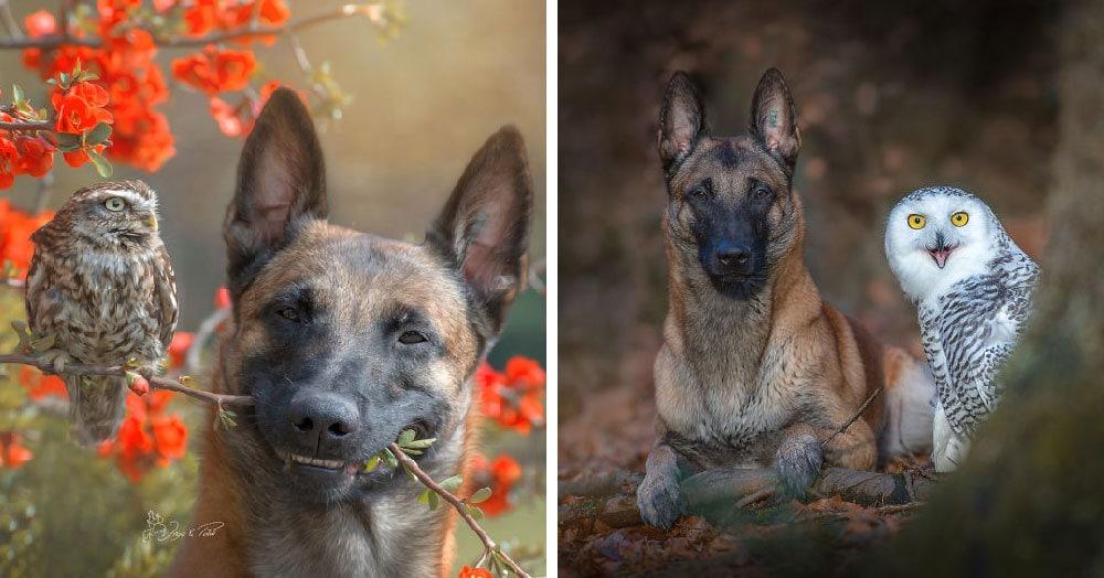 Эта собака выбрала себе самых необычных приятелей, и теперь они жить не могут друг без друга