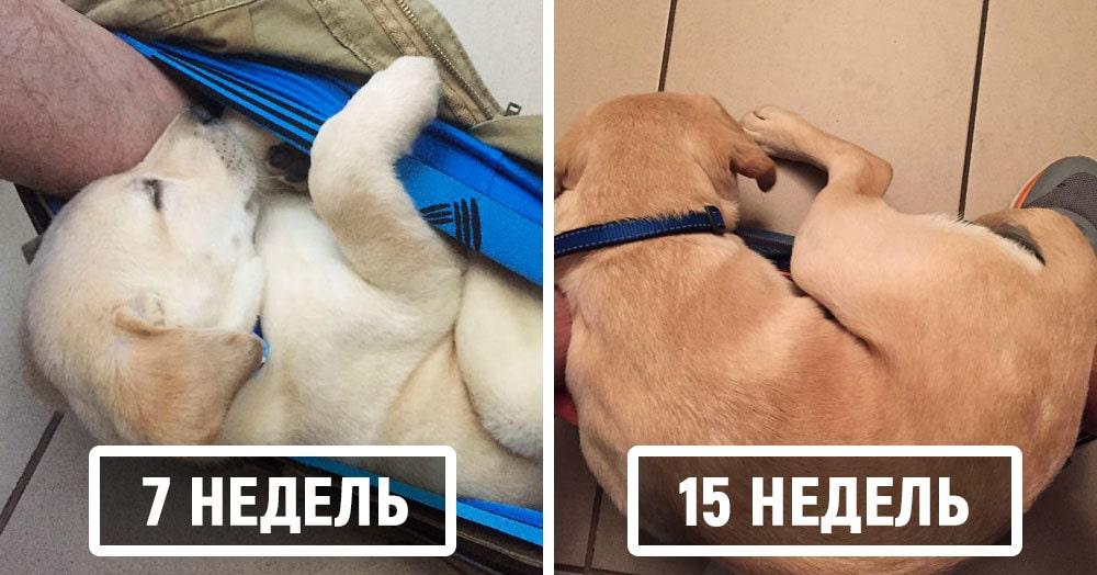Парень просто показал, как рос его пёс, но и представить не мог, что это привлечёт такое внимание к их парочке. А всё из-за любимого места четырёхлапого
