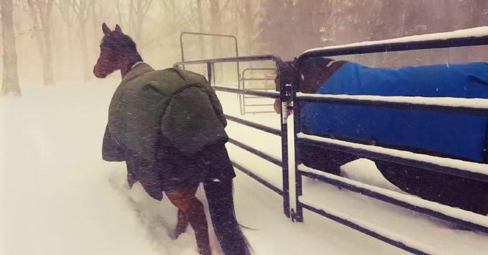 Мужчина отправил своих лошадей на снежную прогулку, и видео с их реакцией собрало уже миллион просмотров. Вы сразу поймёте почему