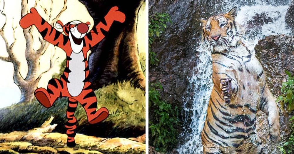 Найден самый настоящий Тигра из Винни Пуха, исполняющий такой же трюк, как и его мультяшный коллега. Сдержать удивление невозможно — мы пытались