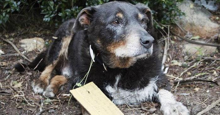В семье думали, что их пёс исчез навсегда, но он вернулся с неожиданной запиской на ошейнике