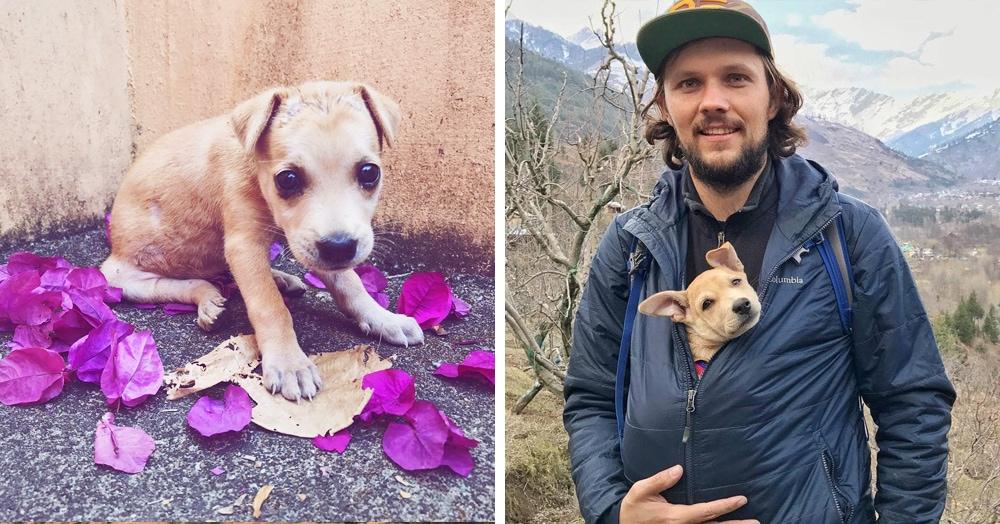 Путешественники рискнули и увезли умирающего щенка из Индии, столкнувшись с множеством трудностей. Но позже собака так изменила их жизнь, что это стоило всех усилий