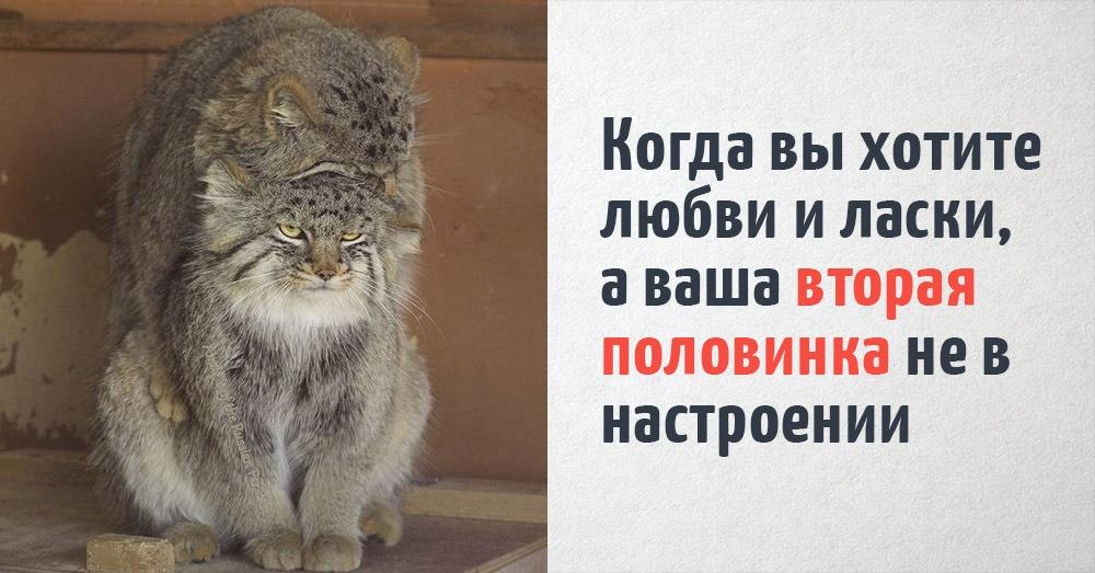 16 котов, которые удивительно точно отражают человеческие ощущения. Несмотря на то, что они коты