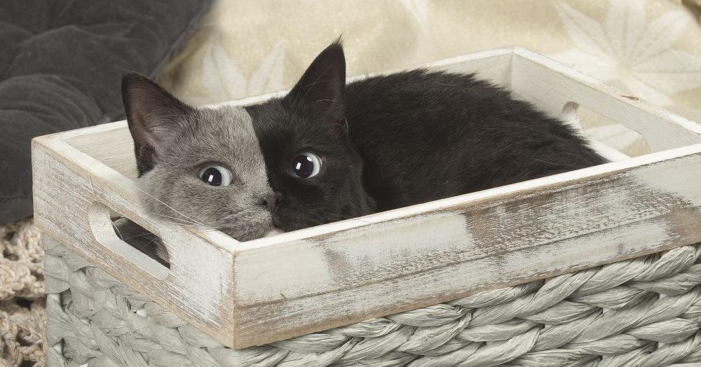 У кота по кличке Нарния есть всё: лапы, хвост и симпатичная серенькая мордашка. Или чёрненькая? Это с какой стороны посмотреть