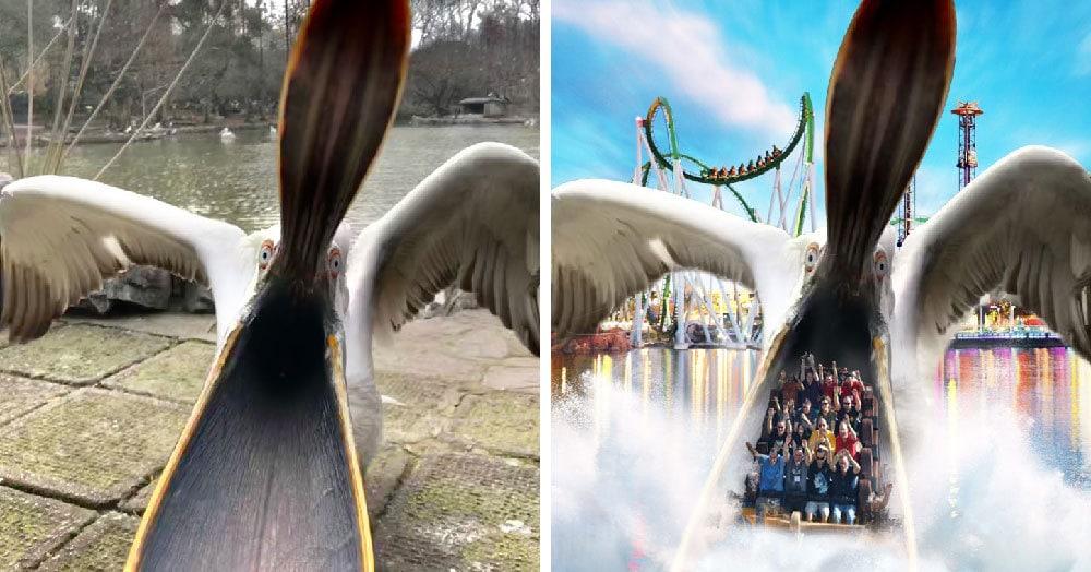 Устрашающая фотография пеликана с раскрытым клювом вдохновила интернет-пользователей на эпичную фотошоп-битву. Ни один фотошопер при этом не пострадал