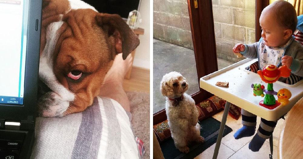 20 очаровательных собак, которые способны заглянуть вам в душу так, что вы отдадите всё, что у вас есть