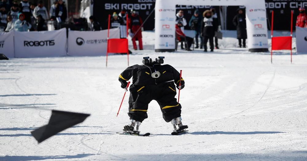 В Южной Корее провели первые соревнования по горным лыжам, куда людей пускали только в качестве помощников. Ведь соревновались там совсем не они