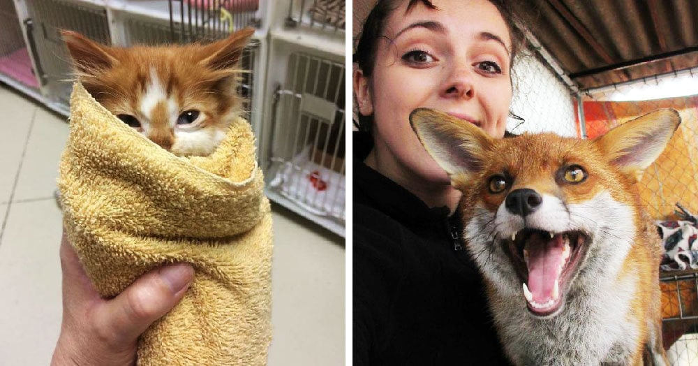Волонтёры приютов для животных поделились снимками рабочих моментов, с которыми они сталкиваются каждый день. Скучать им не приходится