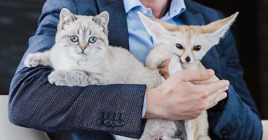 Московский лис Кузьма поиграл с котом и прославился на весь мир. Теперь его хозяйка живёт со звездой Инстаграма