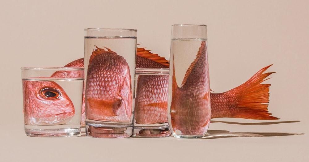 Фотохудожница показала, насколько иначе выглядят привычные нам предметы через призму воды. И ведь такие снимки может сделать каждый