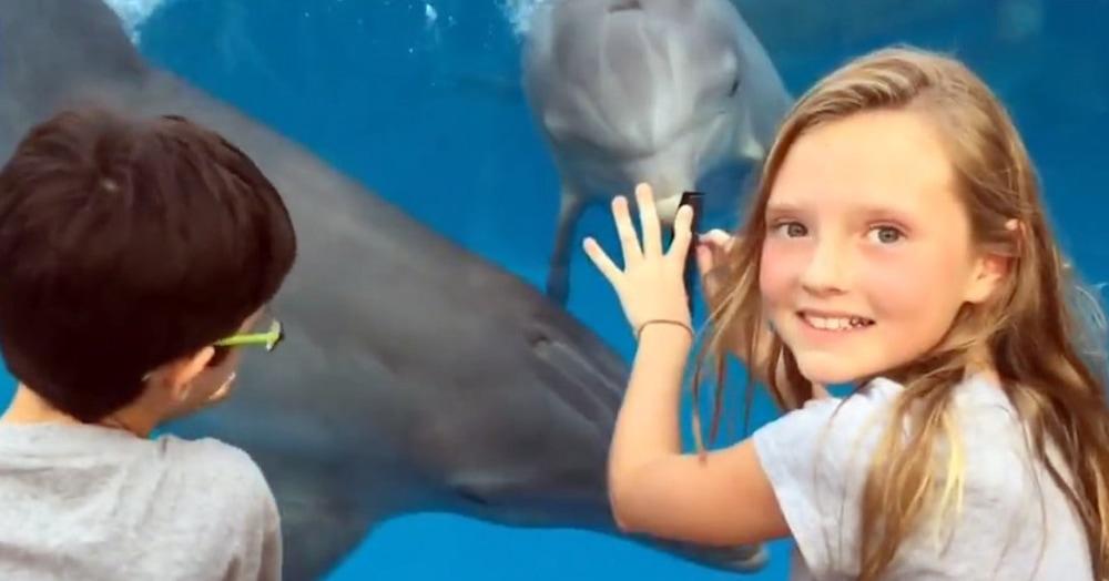 Девочка сумела приманить к себе дельфинов с помощью обычной расчёски. И это гораздо эффективнее, чем стучать по стеклу