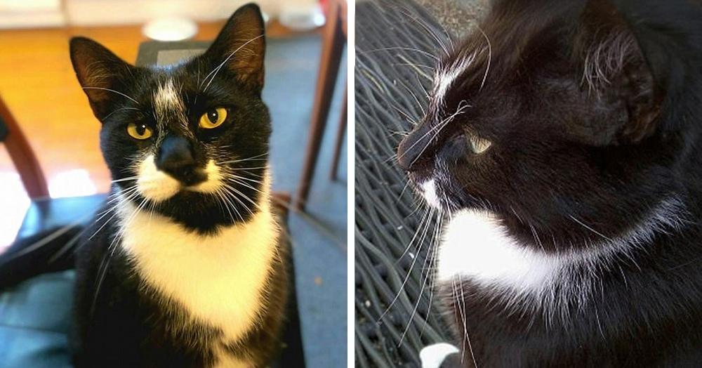 Семейная пара поссорилась из-за чужого белья в своём доме. Во всём оказался виноват кот. Как всегда