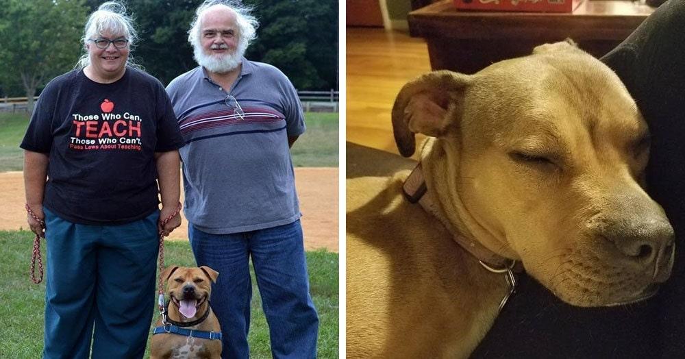 Эти люди спасли пса из бойцовского клуба, но вряд ли они могли предположить, что  это он окажется их спасителем