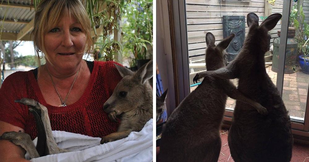 Однажды в дом этой семьи привезли раненого кенгуру, которого они решили оставить у себя. И тут понеслось… Теперь их уже 17, и это не предел