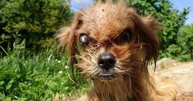 Этот пёс был в таком плохом состоянии, что его бы сам дьявол испугался. Но добрые руки преобразили его до неузнаваемости