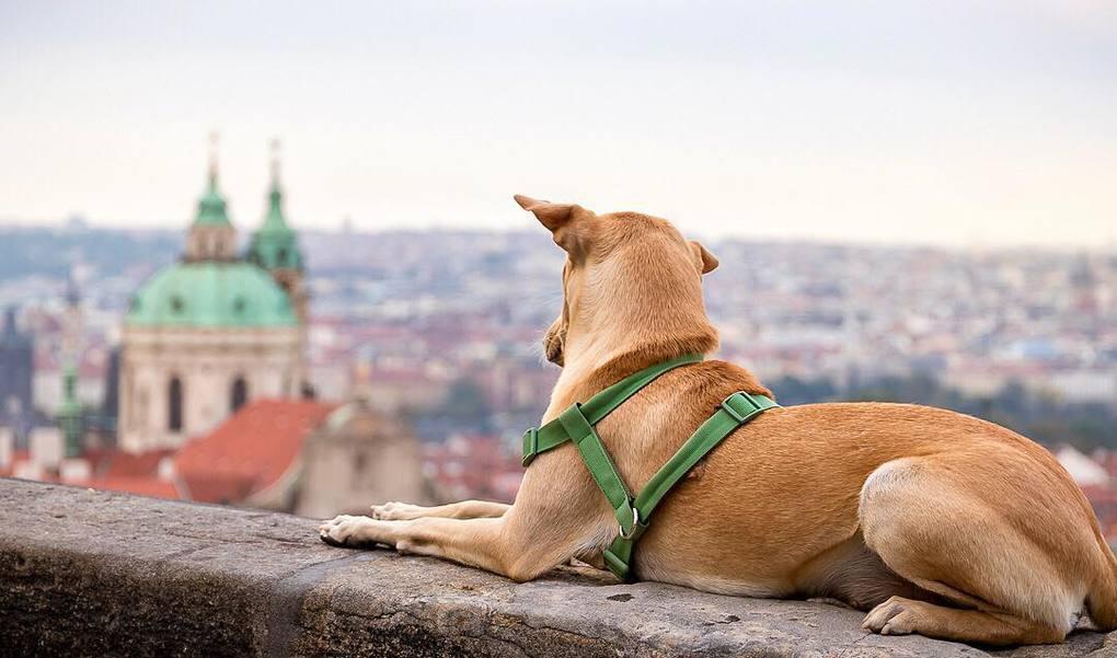 Они услышали громкий плач щенка, кроха умирала на одной из улиц Индии. Только взгляните на него сейчас!