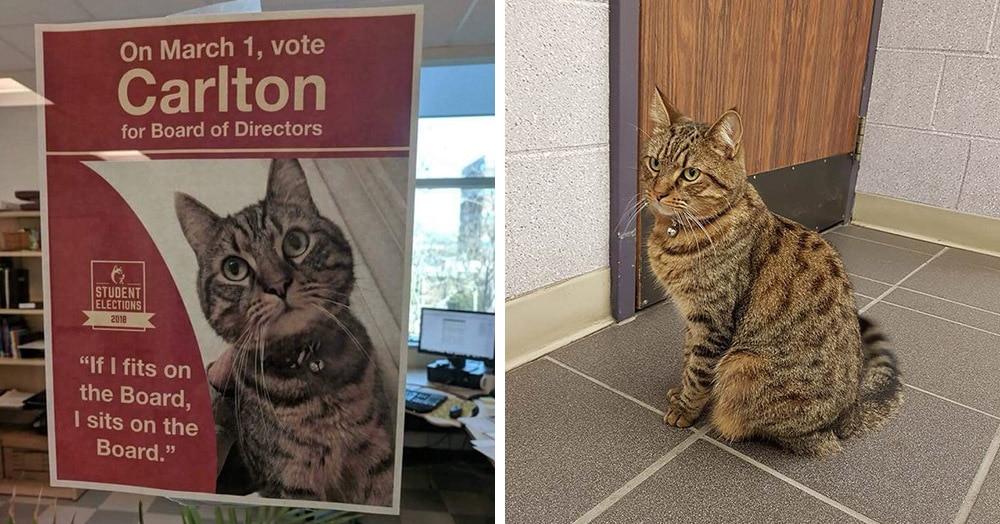 Кот по имени Карлтон просто гулял рядом с университетом и догулялся до кандидата в Совет директоров. На полном серьёзе