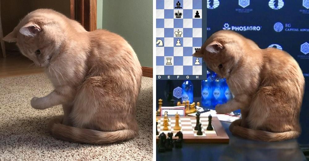 Этот котик смешно поджал лапку, и на него обратили внимание фотошоп-мастера. Теперь его лапки всегда заняты