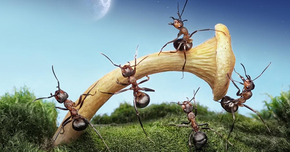 Фотограф сделал серию макро-снимков о жизни муравьёв, которая оказалась куда интереснее, чем кажется на первый взгляд