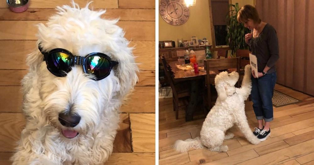 Если вы думали, что собаки не умеют читать, то этот пёс по имени Оукли покажет вам, где раки зимуют