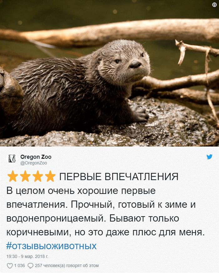13-1 Зоопарки пишут о своих животных отзывы в стиле сайта Amazon. Получилось очень забавно, 5 из 5