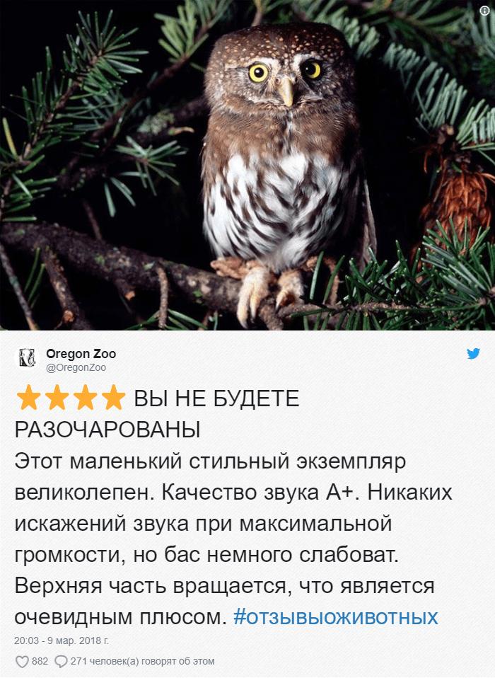15 Зоопарки пишут о своих животных отзывы в стиле сайта Amazon. Получилось очень забавно, 5 из 5