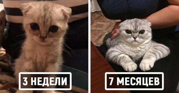Пользователи сети делятся детскими и взрослыми фотками своих котов, и они наглядно демонстрируют, как маленькие милашки становятся пушистыми лордами