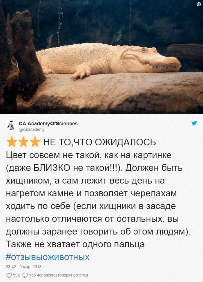 16 Зоопарки пишут о своих животных отзывы в стиле сайта Amazon. Получилось очень забавно, 5 из 5
