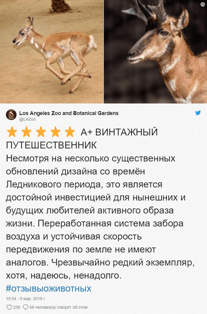 19 Зоопарки пишут о своих животных отзывы в стиле сайта Amazon. Получилось очень забавно, 5 из 5