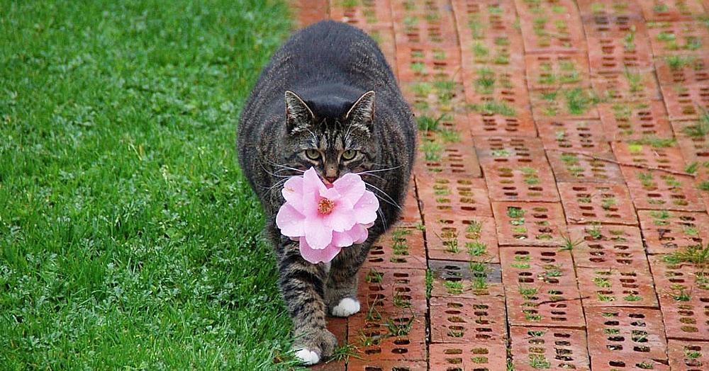 Эта очаровательная кошечка каждый день приносит своей хозяйке цветы. Правда отнюдь не из романтических побуждений