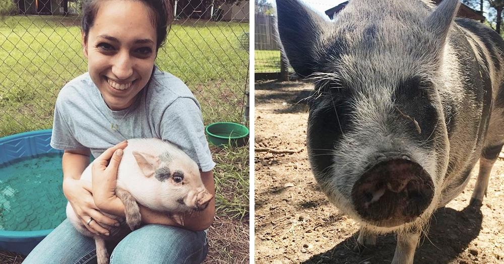 Эта американка очень любит животных. Однажды она купила свинку, чтоб её не съели, но свинка оказалась с сюрпризом